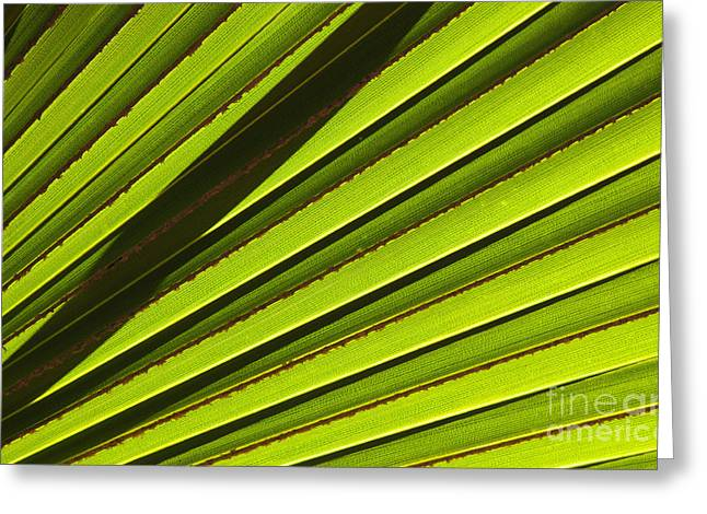 Palm Lines Greeting Card by Mike  Dawson