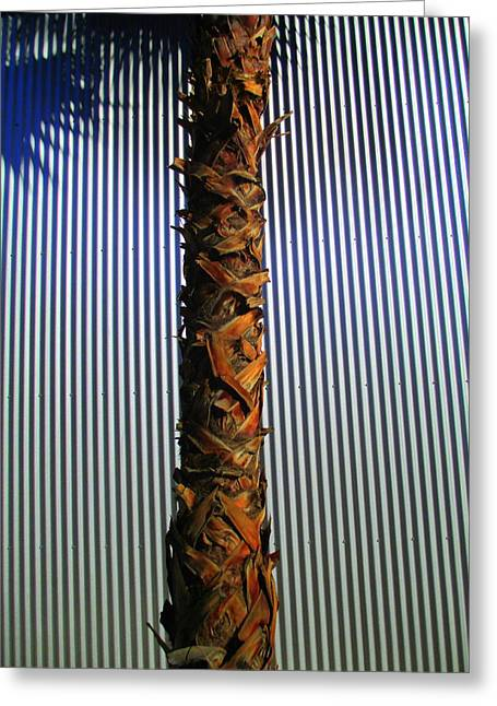 Metal Sheet Greeting Cards - Palm On Sheet Metal Greeting Card by Randall Weidner