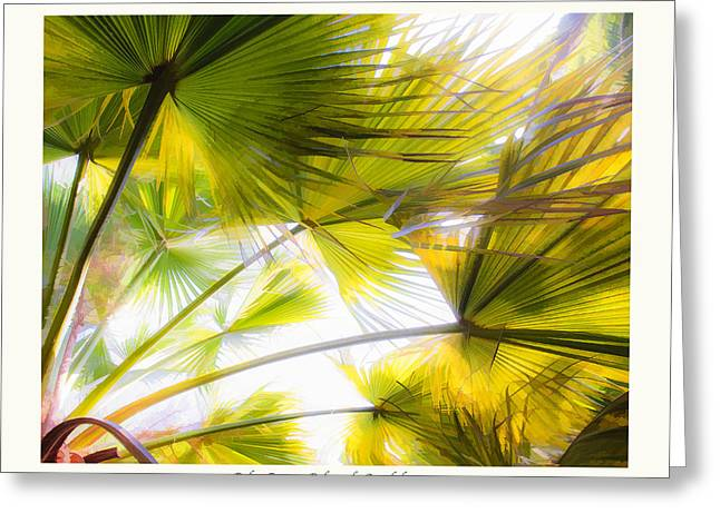 Saxon Holt Greeting Cards - Palm Rays - Palma de Guadalupe Greeting Card by Saxon Holt