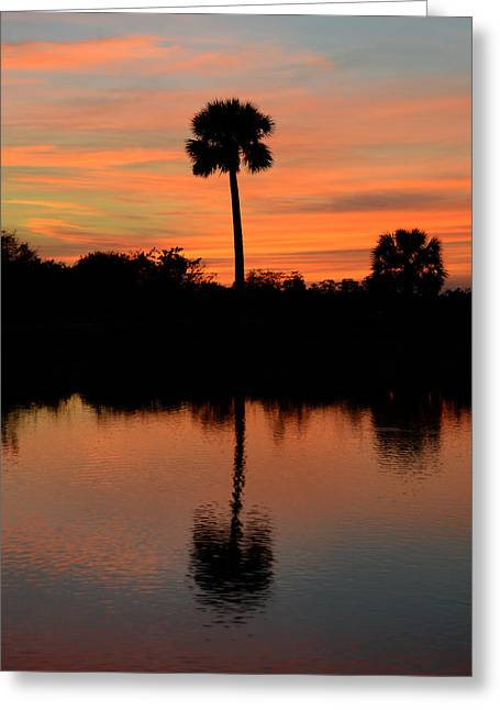 Palm Tree Reflection Greeting Cards - Palm reflection Greeting Card by David Lee Thompson