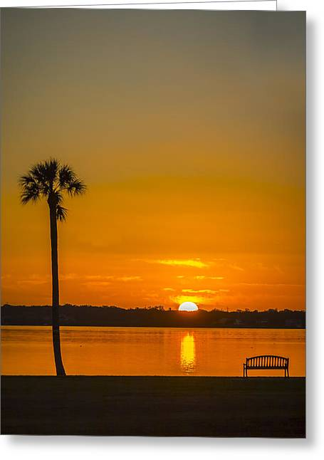Palm Tree Reflection Greeting Cards - Palm Sun and Bench Greeting Card by Marvin Spates