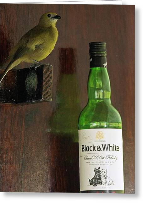 Palm Tanager And Whisky Bottle Greeting Card by Bob Gibbons
