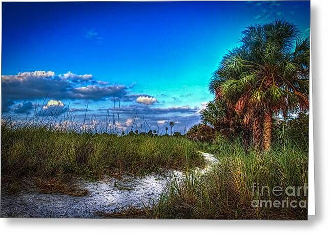 Saw Greeting Cards - Palm Trail Greeting Card by Marvin Spates