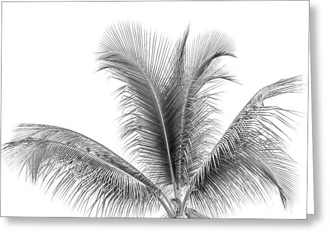 Lines And Shape Greeting Cards - Palm Tree Abstract Greeting Card by Susan Stone