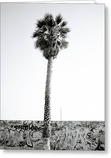 Californian Greeting Cards - Palm Tree And Graffiti Greeting Card by Shaun Higson