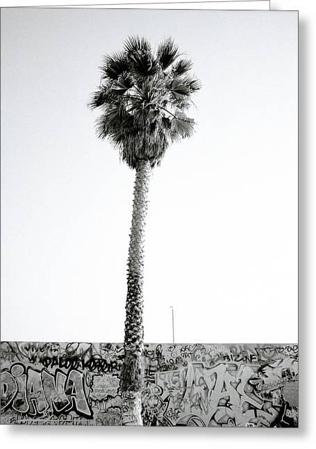 California Beach Art Greeting Cards - Palm Tree And Graffiti Greeting Card by Shaun Higson