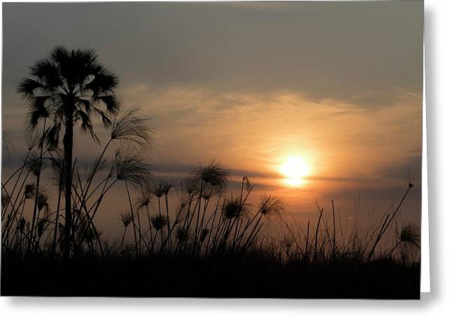 Palm Tree And Papyrus Plants At Dusk Greeting Card by Panoramic Images