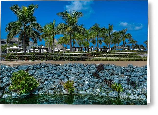 Palm Tree Blue Sky Landscape Greeting Card by Gary Keesler