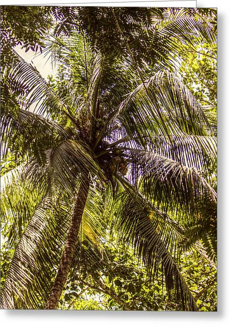 Martha Brae River Greeting Cards - Palm Tree Breeze Greeting Card by Melanie Lankford Photography