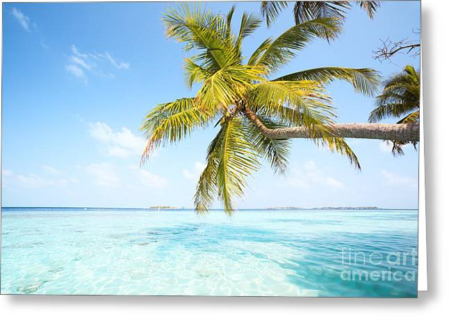 Landscape Posters Greeting Cards - Palm tree in the Maldives Greeting Card by Matteo Colombo