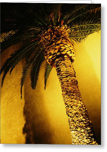 Flora Greeting Cards - Palm Tree in Vegas. Greeting Card by Yo Pedro