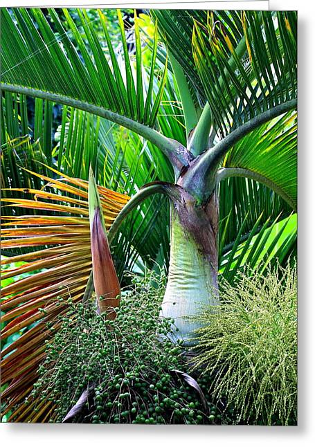Bract Greeting Cards - Palm Tree Inflorescence in the Rainforest  Greeting Card by Karon Melillo DeVega