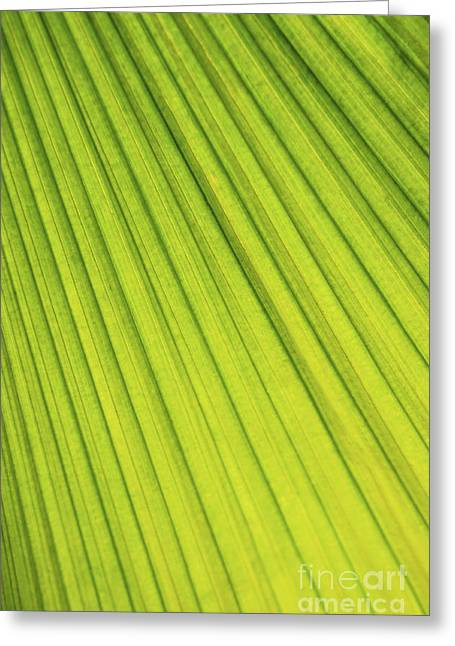 Vitality Greeting Cards - Palm tree leaf abstract Greeting Card by Elena Elisseeva