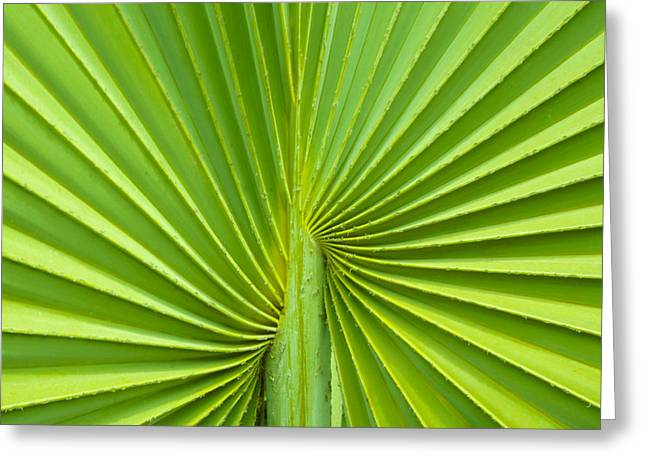 Floral Structure Greeting Cards - Palm tree leaf background Greeting Card by Aged Pixel