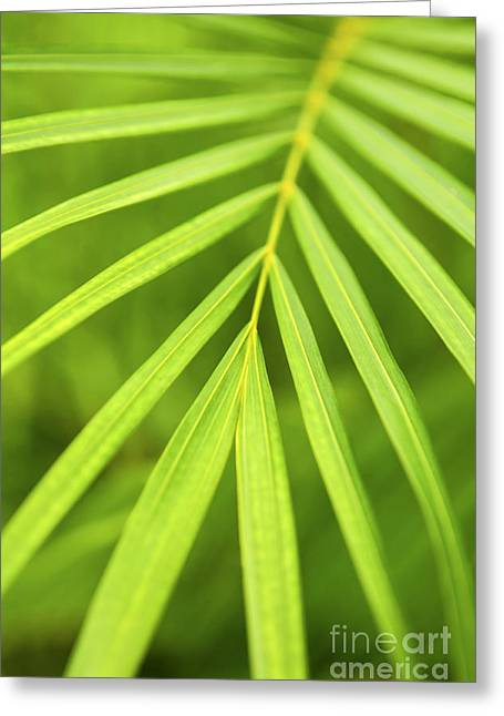 Organic Photographs Greeting Cards - Palm tree leaf Greeting Card by Elena Elisseeva