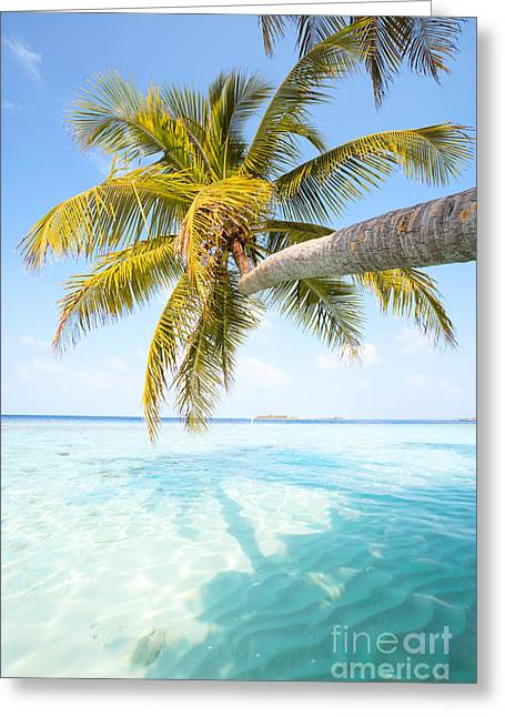 Landscape Posters Greeting Cards - Palm tree leaning over water - Maldives Greeting Card by Matteo Colombo