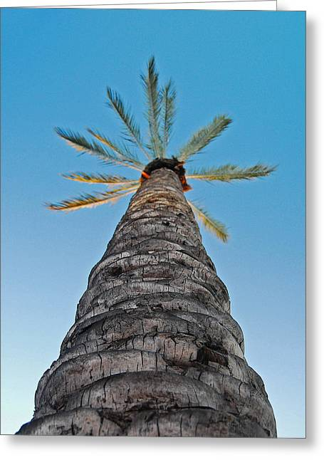 California Art Greeting Cards - Palm Tree Looking Up Greeting Card by Maggy Marsh
