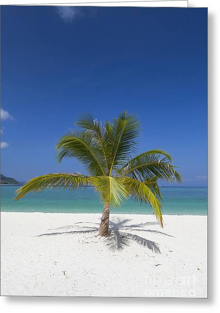 Tranquil Scene Escapism Greeting Cards - Palm tree on beach  Greeting Card by Roberto Morgenthaler