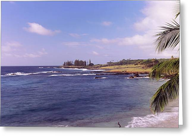 Beach Photography Greeting Cards - Palm Tree On The Beach, Hamoa Beach Greeting Card by Panoramic Images