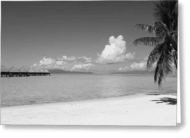 Panoramic Ocean Greeting Cards - Palm Tree On The Beach, Moana Beach Greeting Card by Panoramic Images