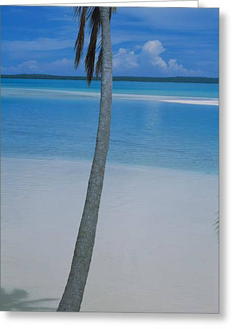 Tall Trees Greeting Cards - Palm Tree On The Beach, One Foot Greeting Card by Panoramic Images