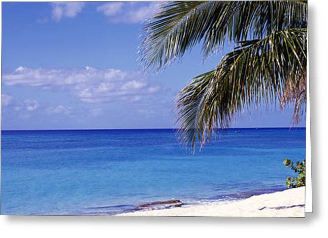 Indy Indians Greeting Cards - Palm Tree On The Beach, Seven Mile Greeting Card by Panoramic Images