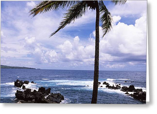 Geology Photographs Greeting Cards - Palm Tree On The Coast, Honolulu Nui Greeting Card by Panoramic Images