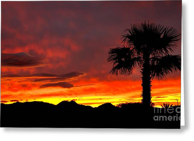 Palm Tree Silhouette Greeting Card by Robert Bales