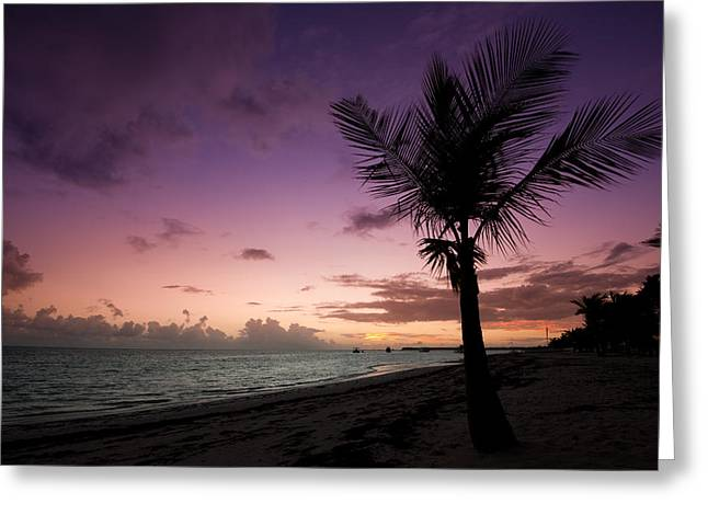 Dominican Greeting Cards - Palm Tree Sunrise Greeting Card by Sebastian Musial