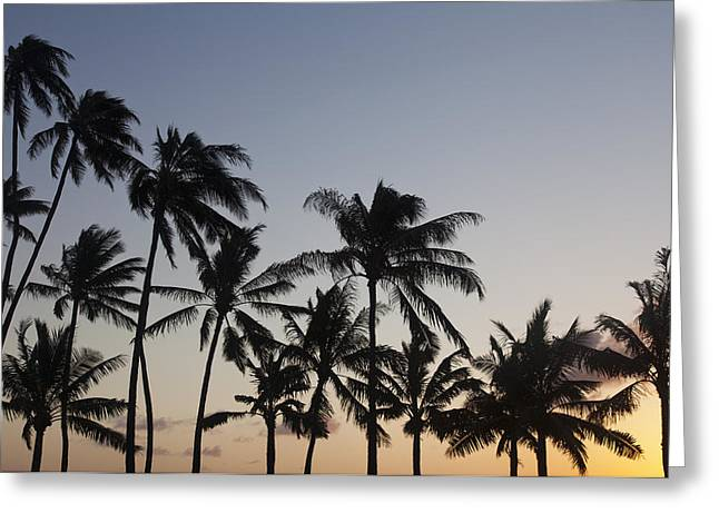 Backlit Greeting Cards - Palm Tree Sunset Greeting Card by Brandon Tabiolo