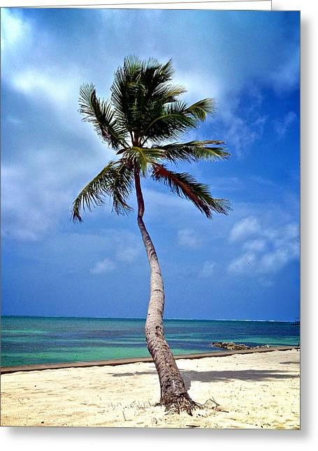 Hallmark Greeting Cards - Palm Tree Swayed Greeting Card by Kristina Deane