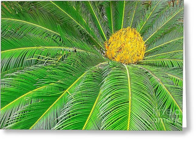 Palm tree with blossom Greeting Card by Dragomir Nikolov