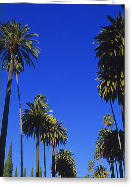 The Hills Greeting Cards - Palm Trees Along A Road, Beverly Hills Greeting Card by Panoramic Images