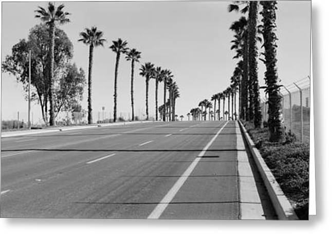 Treelined Greeting Cards - Palm Trees Along A Road, San Diego Greeting Card by Panoramic Images