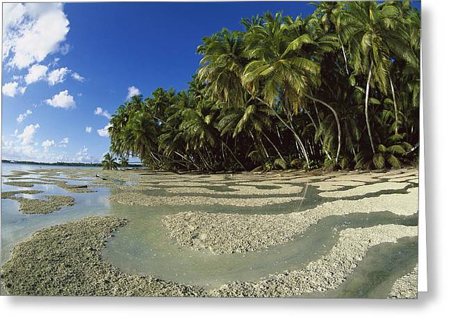 Photos Of Coral Greeting Cards - Palm Trees And Beach Palmyra Atoll Greeting Card by Tui De Roy