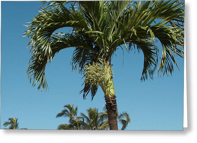 Fruit Tree Art Greeting Cards - Palm trees and blue sky Greeting Card by Sharon Mau