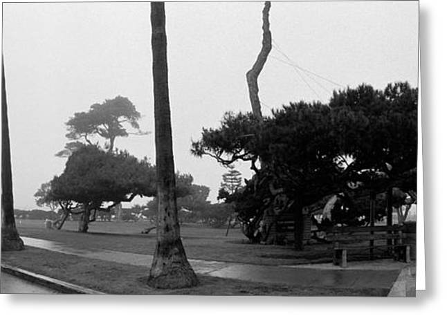 Empty Street Greeting Cards - Palm Trees And Fog, San Diego Greeting Card by Panoramic Images