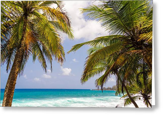 Miel Greeting Cards - Palm Trees and Seascape Greeting Card by Jess Kraft