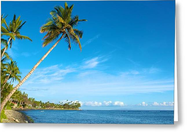 Panoramic Greeting Cards - Palm Trees at Lahaina Greeting Card by Andy Jackson