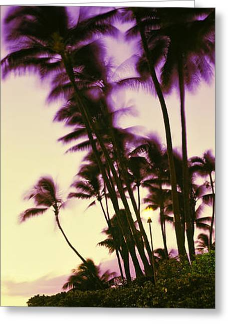 Tree In Rock Greeting Cards - Palm Trees At Sunset, Oahu, Hawaii, Usa Greeting Card by Panoramic Images