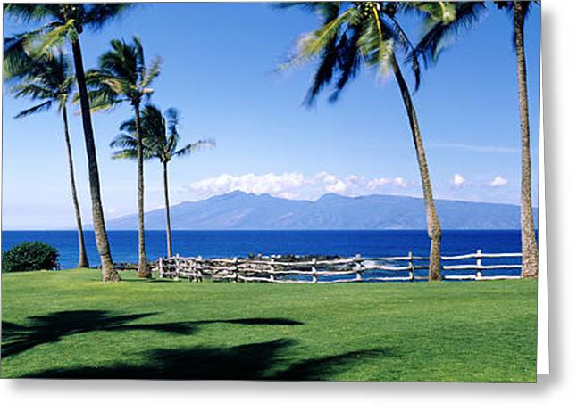 Molokai Greeting Cards - Palm Trees At The Coast, Ritz Carlton Greeting Card by Panoramic Images
