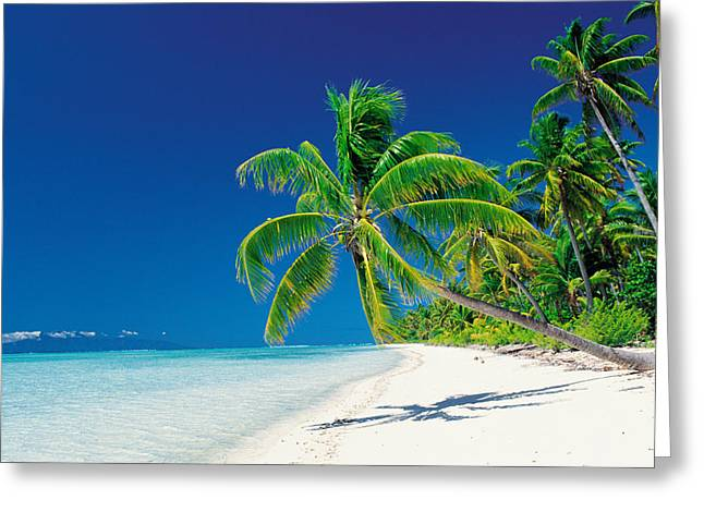 Color Bending Greeting Cards - Palm Trees Bending Over The Beach Greeting Card by Panoramic Images