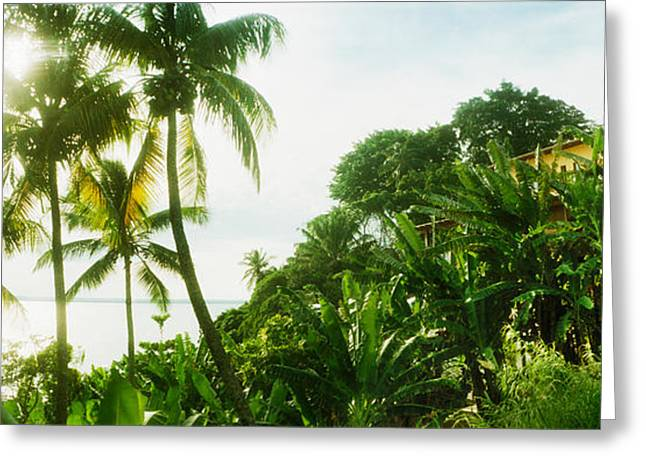 Bungalow Greeting Cards - Palm Trees Covering A Small Bungalow Greeting Card by Panoramic Images