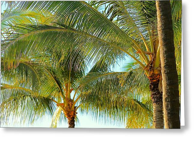 Hawaii Pyrography Greeting Cards - Palm Trees Greeting Card by Eric Wadnal