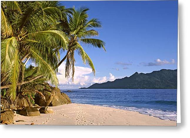 Tree In Rock Greeting Cards - Palm Trees Grow Out Over A Small Beach Greeting Card by Panoramic Images