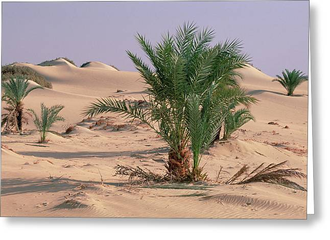 Gerry Greeting Cards - Palm Trees Growing Out Of Sand Greeting Card by Gerry Ellis