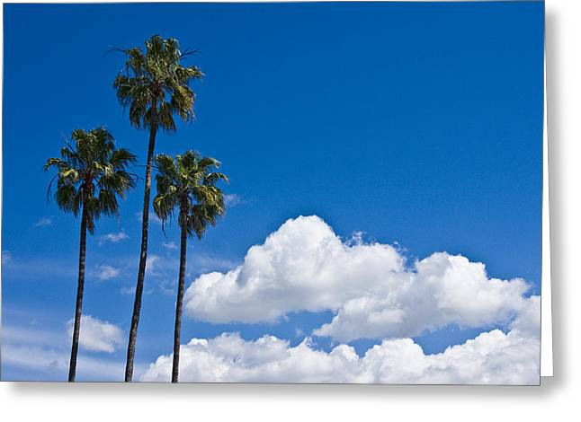 California Art Greeting Cards - Palm Trees in San Diego California No. 1654 Greeting Card by Randall Nyhof