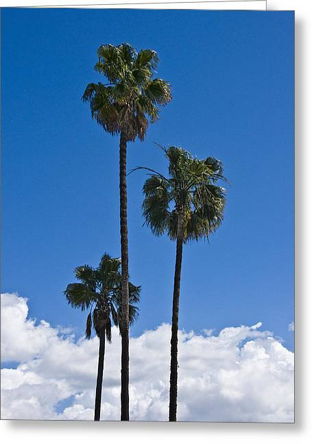 California Art Greeting Cards - Palm Trees in San Diego California No. 1656 Greeting Card by Randall Nyhof