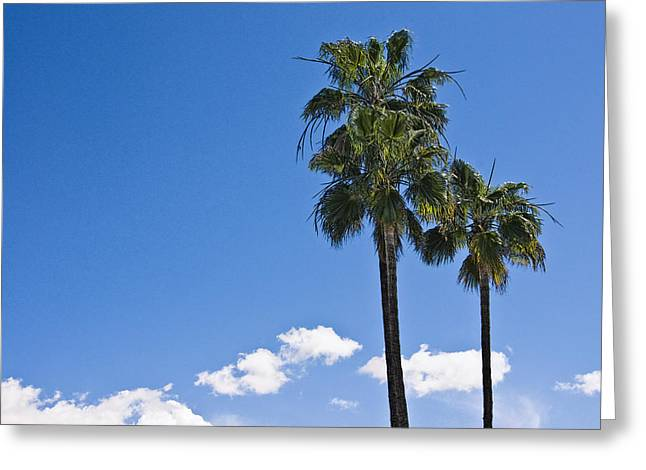 California Art Greeting Cards - Palm Trees in San Diego California No. 1659 Greeting Card by Randall Nyhof