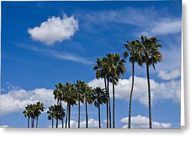 Recently Sold -  - Randy Greeting Cards - Palm Trees in San Diego California No. 1661 Greeting Card by Randall Nyhof
